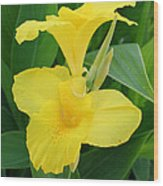 Closeup Of A Tropical Yellow Canna Lily Wood Print
