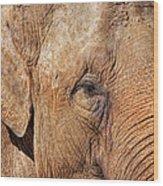 Closeup Of An Elephant Wood Print