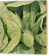 Closeup Of Boston Lettuce Wood Print
