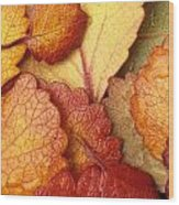 Closeup Of Dwarf Birch Leaves Autumn Ar Wood Print