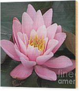 Closeup Of Pink Waterlily In A Pond Wood Print