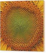 Closeup Of Sunflower Wood Print