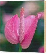 Closeup On Spadix Flower. Wood Print