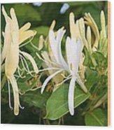 Closeup Shot Of Lonicera European Honeysuckle Flower Wood Print