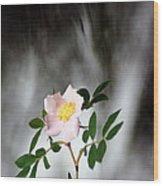 Cloud Mountain Cherokee Rose Wood Print