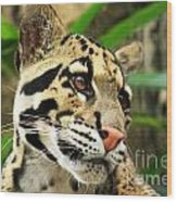 Clouded Leopard Face Wood Print