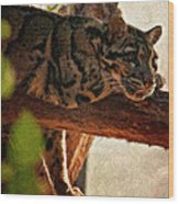 Clouded Leopard II Painted Version Wood Print