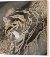 Clouded Leopard - National Zoo - 01134 Wood Print