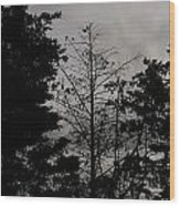 Clouds And Trees Wood Print