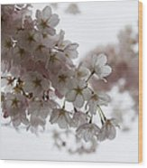 Clouds Of Soft Pink Blossoms - A Tribute To Spring Wood Print