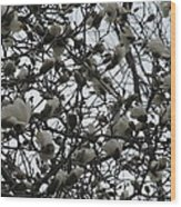 Cloudy Day For Young Magnolias Wood Print