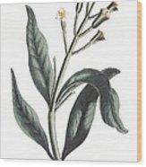 Clove Eugenia Aromatica Wood Print