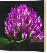 Clover Flower Wood Print by Bob Orsillo