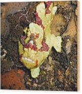 Clown Anglerfisch Wood Print