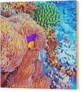 Clown Fish Swimming Near Colorful Corals Wood Print