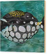 Clown Triggerfish Wood Print