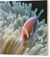 Clownfish 9 Wood Print by Dawn Eshelman