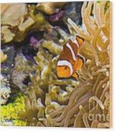 Clownfish Wood Print