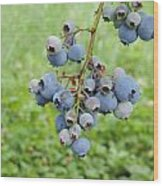 Clump Of Blueberries 3 Wood Print