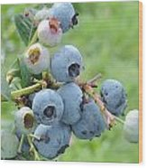 Clump Of Blueberries Wood Print