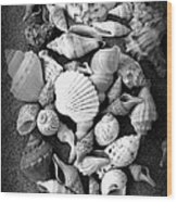 Cluster Of Shells Wood Print