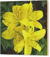 Cluster Of Yellow Lilly Flowers In The Garden Wood Print
