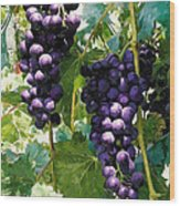 Clusters Of Red Wine Grapes Hanging On The Vine Wood Print