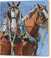 Clydesdale Duo Wood Print