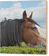 Clydesdale Horse Munching Wood Print