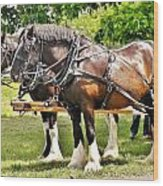 Clydesdale Horses Wood Print
