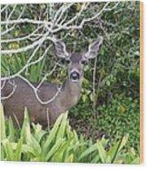 Coastal Deer Wood Print