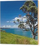 Coastal Farmland Landscape With Pohutukawa Tree Wood Print