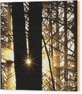 Coastal Forest Wood Print
