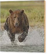 Coastal Grizzly Boar Fishing Wood Print by Kent Fredriksson