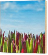 Coastal Ice Plant Wood Print