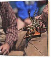 Coastal Maine Is Lobster Wood Print