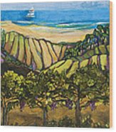 California Coastal Vineyards And Sail Boat Wood Print