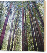 Coastal Redwoods Reach For The Sky In Armstrong Redwoods State Preserve Near Guerneville-ca Wood Print
