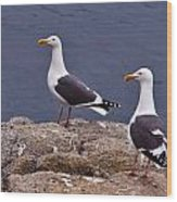Coastal Seagulls Wood Print