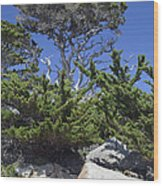 Coastal Trees In California's Point Lobos State Natural Reserve Wood Print by Bruce Gourley