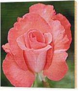 Cobra Rose  Wood Print by Christine Till
