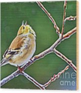 Cock-a-doodle Doo Gold Finch - Digital Paint Wood Print
