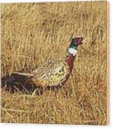 Cock Ringneck Pheasant Wood Print