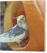 Cockatiel - Glutton Wood Print