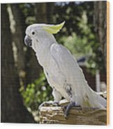 Cockatoo White Parrot Wood Print