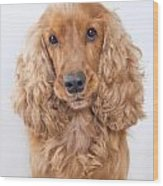 Cocker Spaniel Dog Portrait Wood Print