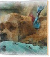 Cocker Spaniel Photo Art 06 Wood Print