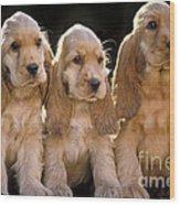 Cocker Spaniel Puppies Wood Print