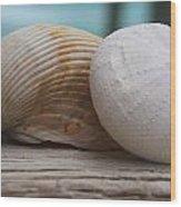 Cockle And Sea Urchin Wood Print