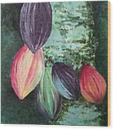 Cocoa Pods Wood Print